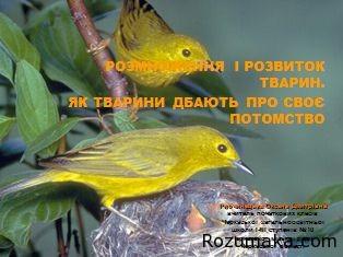rozmnozhennya-i-rozvitok-tvarin