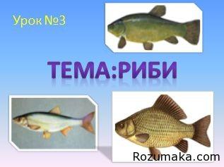 ribi-1-klas