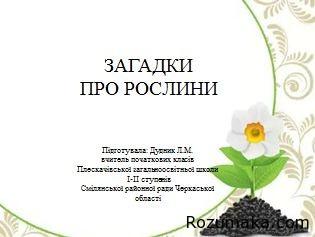 загадки про рослини
