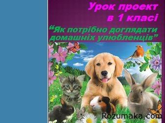 yak-doglyadati-domashnih-ulyublentsiv